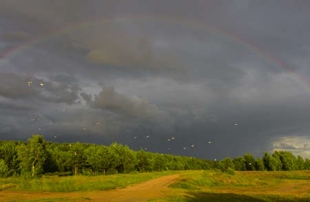 a flock of seagulls against the backdrop of formidable clouds and a rainbow, photo taken in the evening at sunset Stock fotó