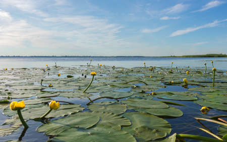 view of Lake Nero and water lilies on a sunny summer day, photo taken above the water surface