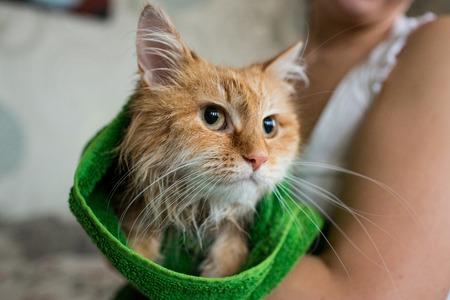 Cute ginger cat after a bath, funny little demon