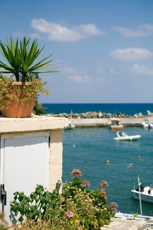 Boom In Pot Op Balkon.Twee Kleurrijke Potten Met Cactus Op Een Houten Tafel In Een Cafe