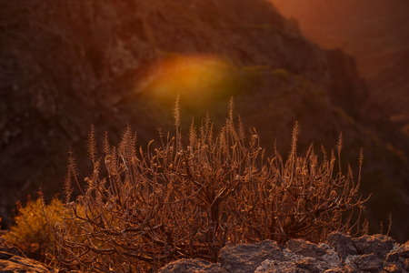 plants at sunset in Tenerife Canary Islands