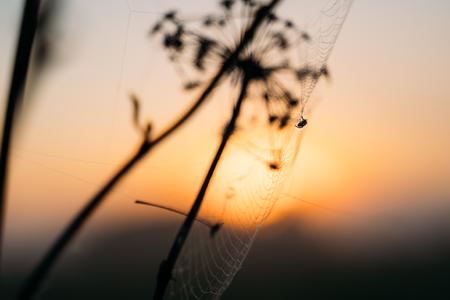 closeup photo of spider on web. sunset