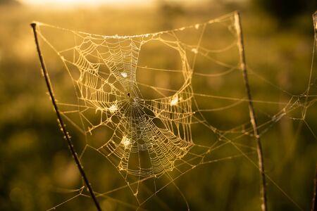macro photo of spider web on sunrise background