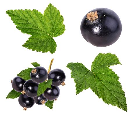 Zwarte bessen en bladeren geïsoleerd. Verzameling Stockfoto