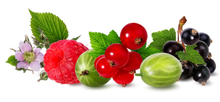 Berries collection. Raspberry, gooseberry, currant, isolated on white. Imagens
