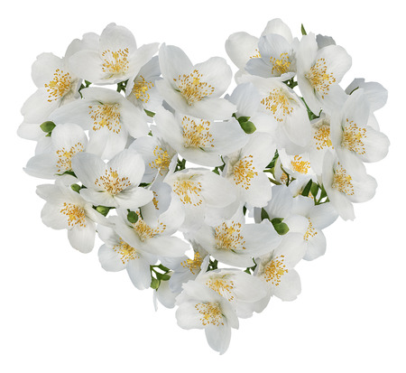 Jasmine flowers  Heart Over White.   Heart Made Out of jasmine flowers  on white 스톡 콘텐츠