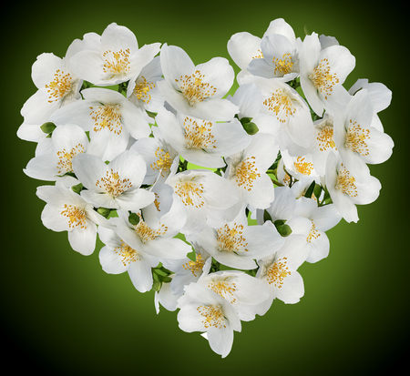 Jasmine flowers.Heart Made Out of jasmine flowers  on white 스톡 콘텐츠
