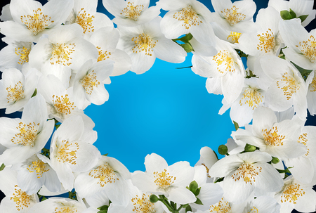 Jasmine flowers frame isolated on white