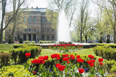 Tulips in Zrinjevac park Croatian Academy of Science and Arts