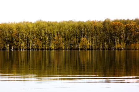 flooded: Wood in flooded field in autumn in Lonjsko polje, Croatia, reflection on water