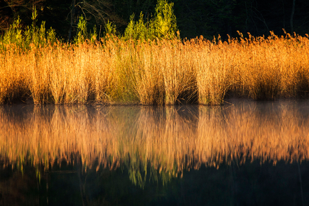 Reflection of trees and sedge on Tracoscan lake in Zagorje, Croatia