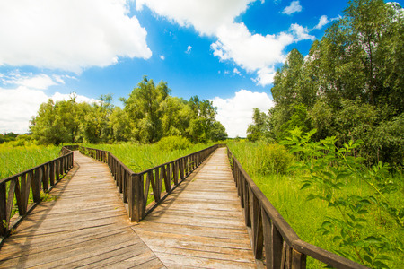 Croatia, Baranja, Kopacki Rit nature park wooden boardwalk view 写真素材