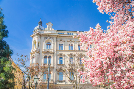 Old down town in Zagreb Croatia and magnolia blossom in spring