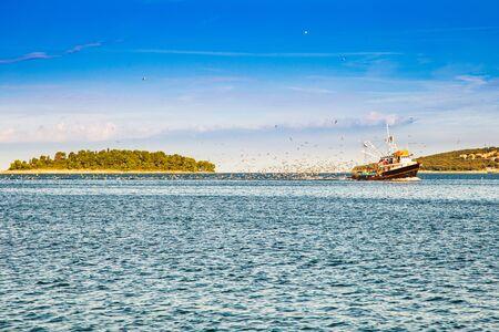 Flock of seagulls following fishing boat at Adriatic sea approaching the coastline in Istria, Croatia