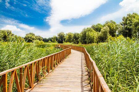 Nature park Kopacki Rit, wooden boardwalk view, region of Baranja, Croatia