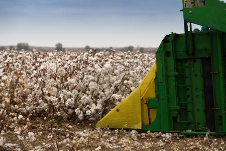 Cotton picker is harvesting a field in Greece