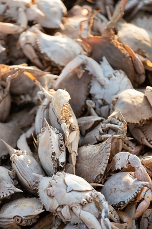 Empty crab shells making piles by Vistonida lake in Rodopi, Greece