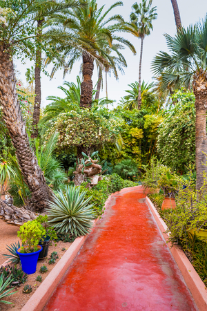 Red pathway among the tropical trees and plants in Majorelle Garden (Jardin Majorelle), Marrakesh, Morocco