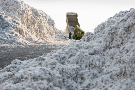 Piles of seed cotton in a ginning mill in Greece during harvesting season