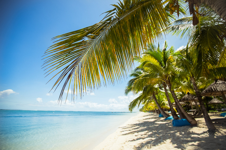 Tropical beach with palms and blue water.