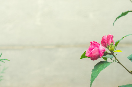 beautiful pink flower on a gray background, march 8, beautiful wallpaper