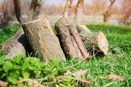 Firewood on green grass, outdoor recreation, spring, summer, sunny weather   Stock Photo