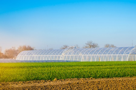 greenhouses in the field for seedlings of crops, fruits, vegetables, lending to farmers, farmlands, agriculture, rural areas, agro-industrial complex. winter crops. selective focus Standard-Bild