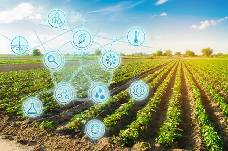 Pimienta de campo de granja. Innovación y tecnología moderna. Control de calidad, aumento de los rendimientos de los cultivos. Seguimiento del crecimiento de las plantas, seguimiento de las condiciones naturales. Digitalización de la agroindustria. Foto de archivo