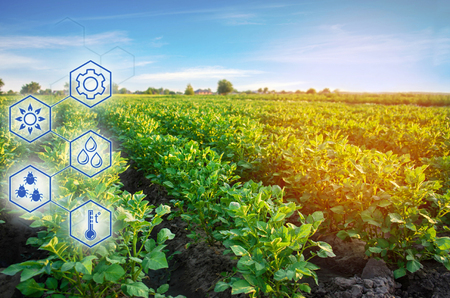 Potato in the field. High technologies and innovations in agro-industry. Study quality of soil and crop. Scientific work and development of new methods and selection of varieties. Investing in farming