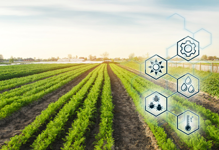 Carrot in the field. Scientific work and development of new methods and selection of varieties. High technologies and innovations in agro-industry. Investing in farming Study quality of soil and crop