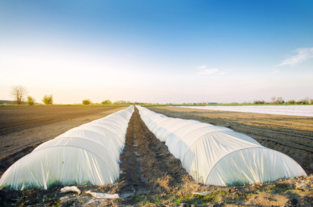 Growing organic vegetables in small greenhouse under plastic film on the field. Farming Agriculture Farmland. Selective focus