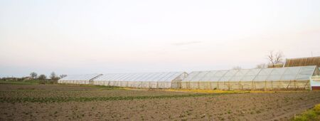 Greenhouses in the field for seedlings of crops. Growing organic vegetables. Lending to farmers. Farmlands agriculture agro-industrial complex. Winter crops. Soft selective focus Stock Photo