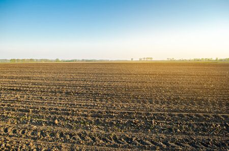 Plowed field after cultivation for planting agricultural crops. Landscape with agricultural land. Beds for plants. Agriculture, agroindustry. Farming. Selective focus