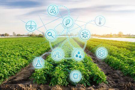 Wysokie technologie i innowacje w przemyśle rolnym. Badanie jakości gleby i plonu. Praca naukowa i opracowywanie nowych metod i selekcji odmian. Inwestowanie w rolnictwo. Ziemniak na polu