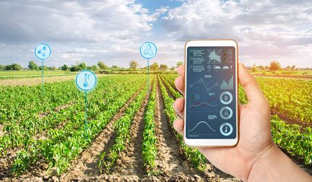 Farmers holds a smartphone on a background of a field with a pepper plantations. Agricultural startup. Automation and crop quality improvement. High technology, innovation. Scientific research. 写真素材