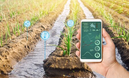 Farmers holds a smartphone on a background of a field with a leek plantation. Agricultural startup. Automation and crop quality improvement. High technology, innovation. Scientific research. Pomology