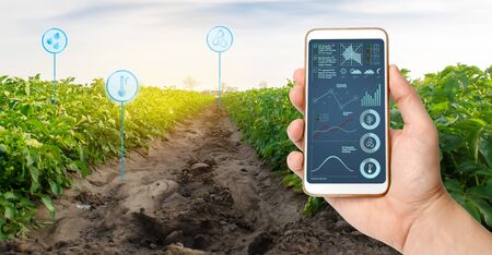 Farmer's holds a smartphone on a background of a field with a potato plantations. Agricultural startup. Automation and crop quality improvement. High technology, innovation. Scientific research.