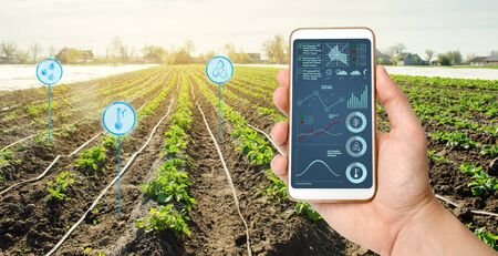 Farmers holds a smartphone on a background of a field with a potato plantations. Agricultural startup. Automation and crop quality improvement. High technology, innovation. Scientific research.
