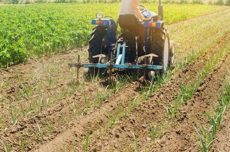 A farmer cultivates vegetable rows of leek. Plowing field. Weed protection. Seasonal farm work. Agriculture crops. Farming, farmland. Organic vegetables. Ukraine, Kherson region. Selective focus