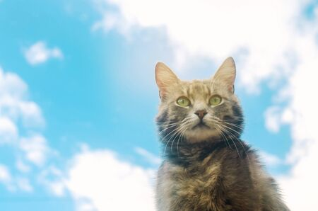 Portrait of a gray cat on blue sky background. Cute pet. Funny animal. Soft selective focus Imagens