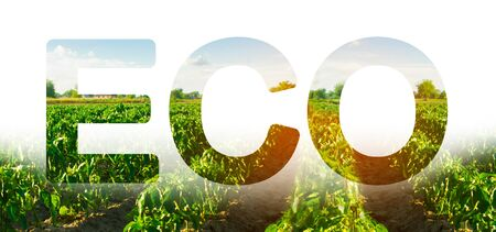 Eco inscription on the background of pepper plantation field. Condition of winter crops. Environmentally friendly harvest, quality control and use of safe pesticides. Care for a young crop.