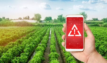 A phone and a warning sign on the background of plantations of sweet Bulgarian bell pepper. harmful pesticides and chemicals in agriculture. Environmental hazard, presence of microplastics in the crop Stockfoto
