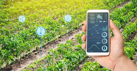 Farmer hold a smartphone on a background of a field with a pepper plantations. Agricultural startup. Automation and crop quality improvement. High technology, innovation. Scientific research. Stockfoto
