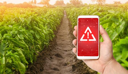 A phone and a warning sign on the background of sweet Bulgarian bell pepper plantation. Farming, harvesting. Harmful pesticides and chemicals in agriculture. Environmental hazard Stock Photo