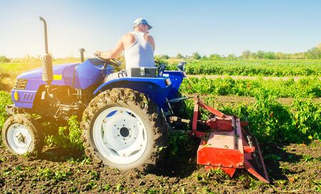 Tractor cultivates the soil after harvesting. A farmer plows a field. Pepper plantations. Seasonal farm work. Agriculture crops. Farming, farmland. Selective focus Stock Photo