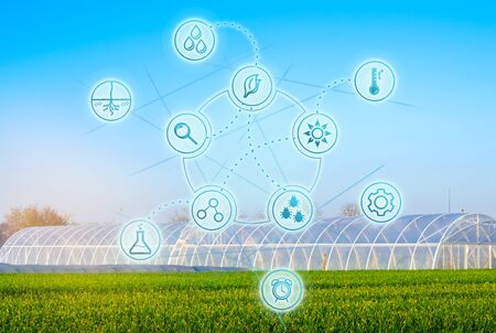 Biotechnology in the agro-cultural industry. High technologies and innovations. Farming and agronomy. Selection of agricultural plants. Agricultural mechanization. Greenhouses for vegetables. Stock Photo