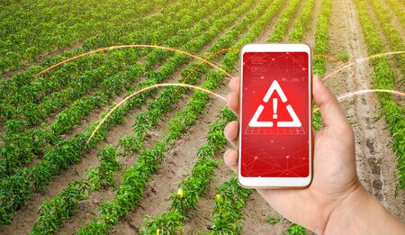 The phone warns of the danger on the sweet pepper plantation farm field. Monitoring and analysis of presence of chemicals, heavy metals, pollution, radiation or microplastics in the crop.