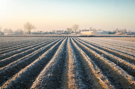 Winter farm field ready for new planting season. Agriculture and agribusiness. Choosing right time for sow fields plant seeds, protection from spring frosts. Preparatory agricultural work for spring. Stok Fotoğraf