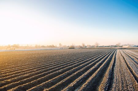 Winter farm field ready for new planting season. Agriculture and agribusiness. Preparatory agricultural work for spring. Choosing right time for sow fields plant seeds, protection from spring frosts.