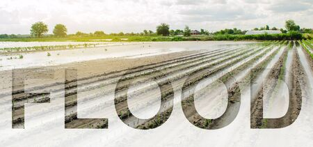 Word inscription Flood on background Flooded field as a result of a natural disaster. Unpredictable weather and global destabilization of climate, global warming. bad harvest, farmers financial loss